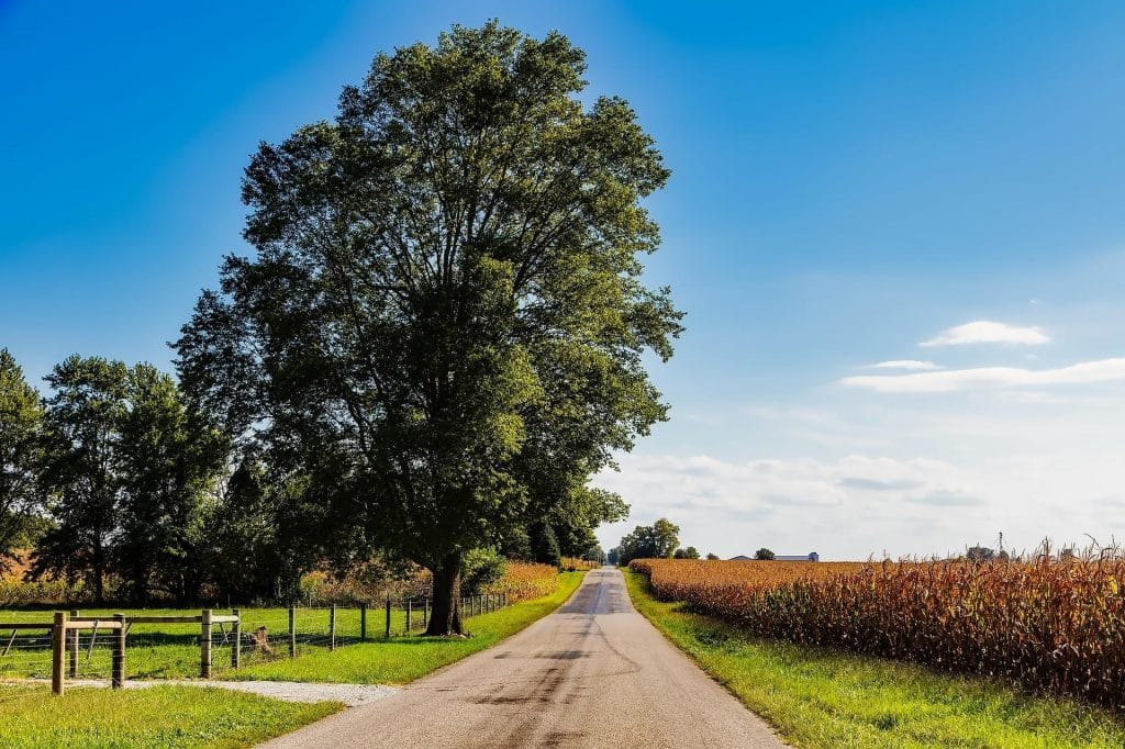 A tree by the road in Indiana