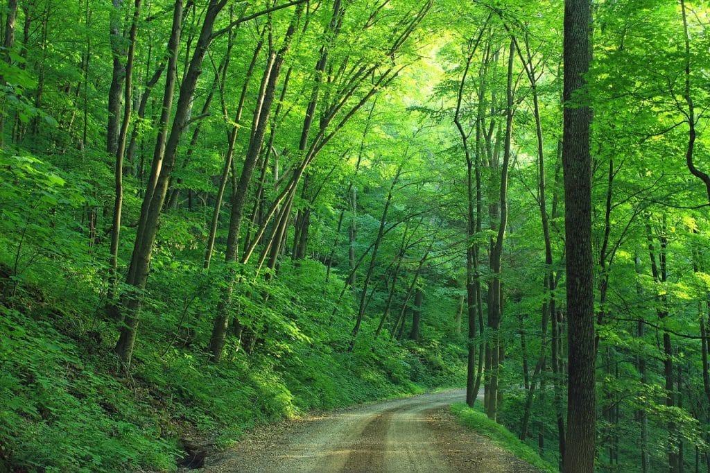 Path through the woods of Pennsylvania